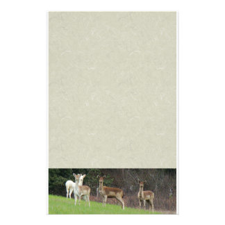 White & Brown Deer Stationery