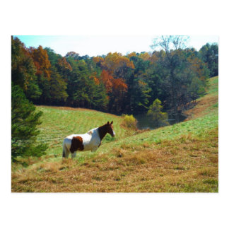 White & Brown horse, Autumn pond Post Cards