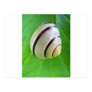White-brown snail greeting card