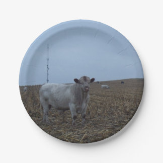 White Bull in a newly harvested Iowa Corn Field 7 Inch Paper Plate