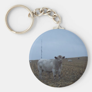 White Bull in a newly harvested Iowa Corn Field Keychain