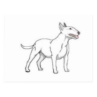 White Bull Terrier Postcard