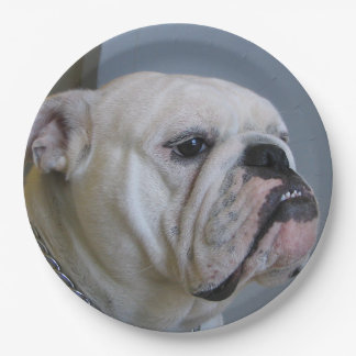 white Bulldog Paper Plate