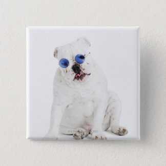 White bulldog with blue tinted shades button