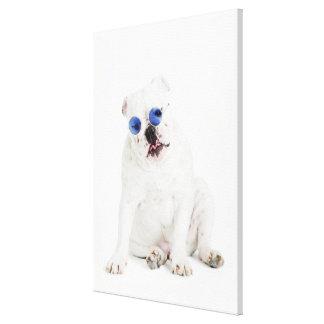 White bulldog with blue tinted shades canvas print