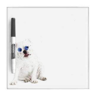 White bulldog with blue tinted shades Dry-Erase board