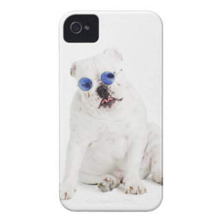 White bulldog with blue tinted shades iPhone 4 Case-Mate case