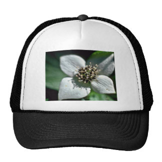 White Bunchberry Blossom Closeup flowers Hats