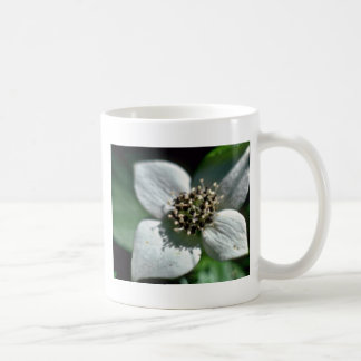 White Bunchberry Blossom Closeup flowers Coffee Mugs