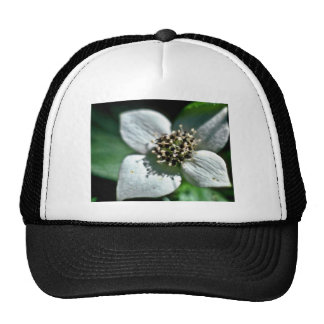 White Bunchberry Blossom Closeup Hat