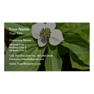White Bunchberry Blossom flowers Business Card Templates