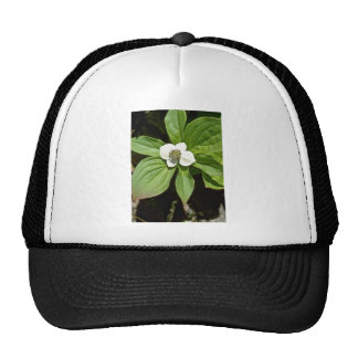 White Bunchberry Blossom flowers Mesh Hats