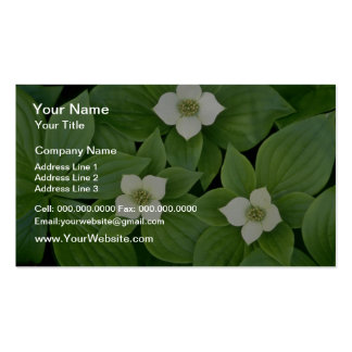 white Bunchberry blossoms flowers Business Card Template