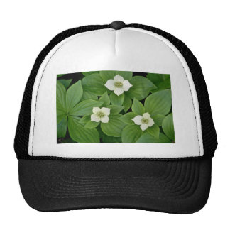 white Bunchberry blossoms flowers Trucker Hat