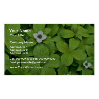 White Bunchberry flowers Business Card Templates