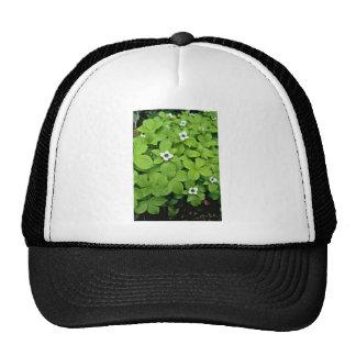 White Bunchberry flowers Trucker Hats