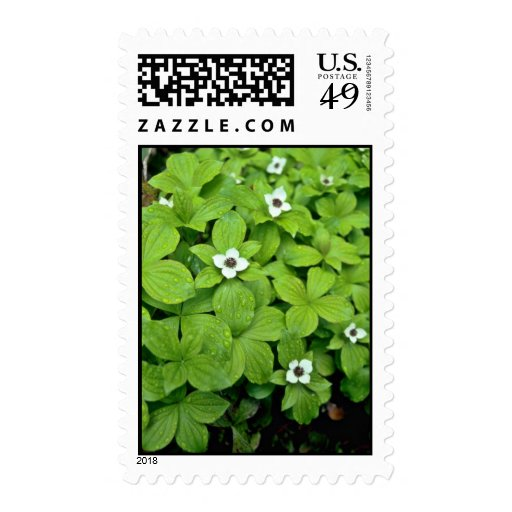 White Bunchberry flowers Stamp