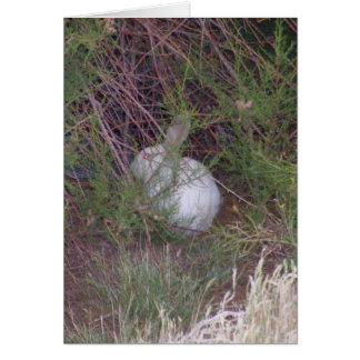 White Bunny In Yard Blank Card / Poem on back