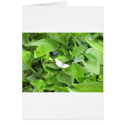 White Butterfly Card