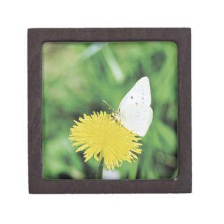 White butterfly feeding on a dandelion premium trinket boxes