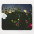 White Butterfly in flight at sunset Mouse Pad