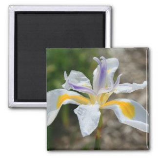 White Butterfly Iris Flower Magnet