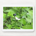White Butterfly Mouse Mats