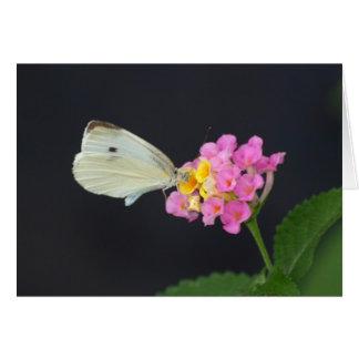 White Butterfly on Lantana - card