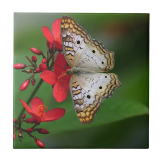 White Butterfly on Red Flowers Ceramic Tile