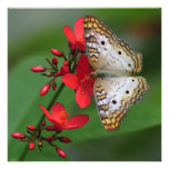 White Butterfly on Red Flowers Invitation