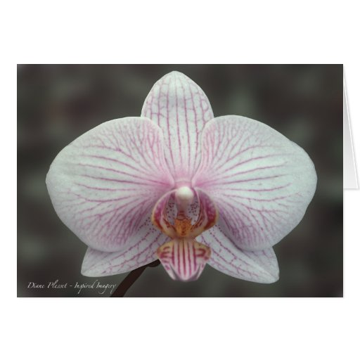 White  Butterfly Orchid Card