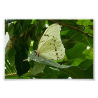 White Butterfly Print