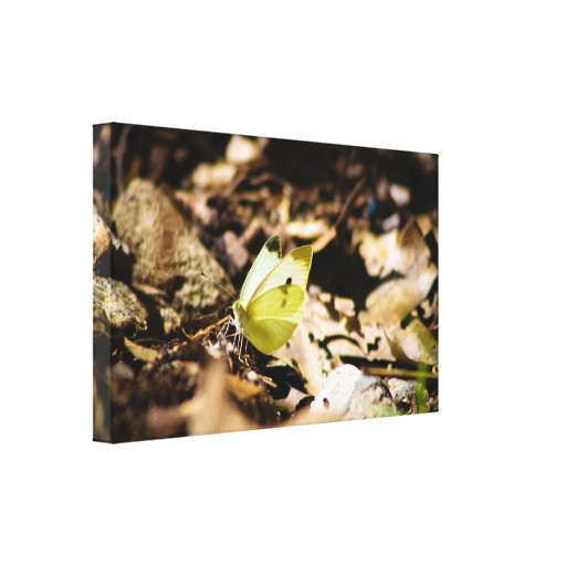 White Butterfly Stretched Canvas Print