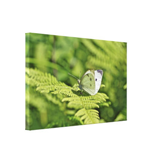 White Cabbage Butterfly On Ferns - Pieris rapae Canvas Print