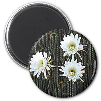 White Cactus Blooms 2 Inch Round Magnet