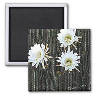 White Cactus Blooms 2 Inch Square Magnet