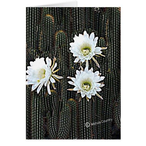 White Cactus Blooms Greeting Cards