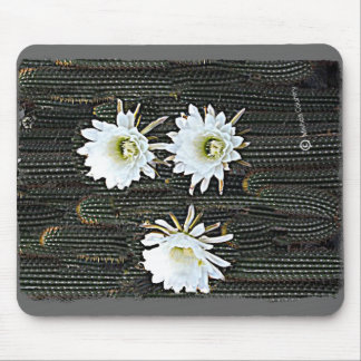 White Cactus Blooms Mouse Pad