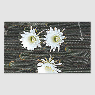 White Cactus Blooms Rectangular Sticker