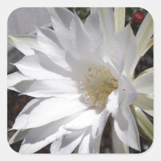 White Cactus Flower Bloom Square Sticker