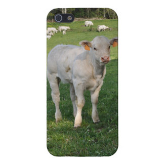 White calf in dappled sunlight case for iPhone SE/5/5s