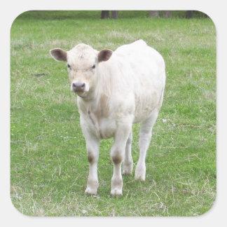 White Calf Square Stickers
