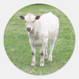 White Calf Stickers