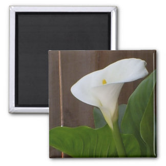 White Cali Lily 2 Inch Square Magnet