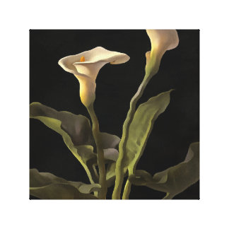 White Calla Lilies On A Black Background Canvas Print