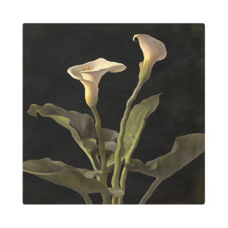 White Calla Lilies On A Black Background Metal Photo Print