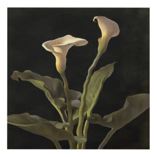 White Calla Lilies On A Black Background Panel Wall Art