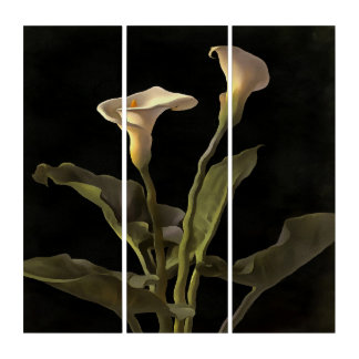 White Calla Lilies On A Black Background Triptych