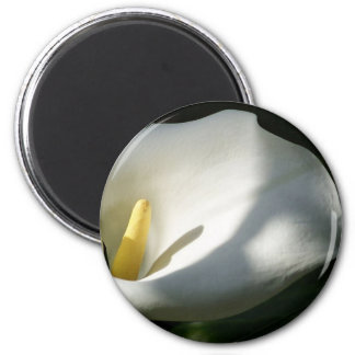 White Calla Lilies Over Black Background In Soft F Magnet