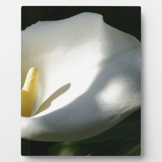 White Calla Lilies Over Black Background In Soft F Plaque